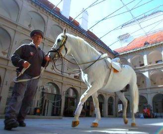 Lippanzzer Horses - Spanish Riding School