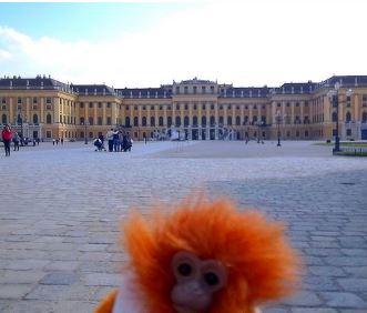 Minkey at Shonbrun Palace
